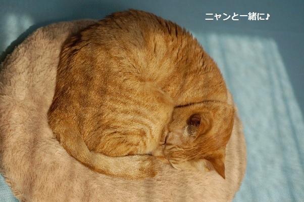 nikkouyoku415 (1)