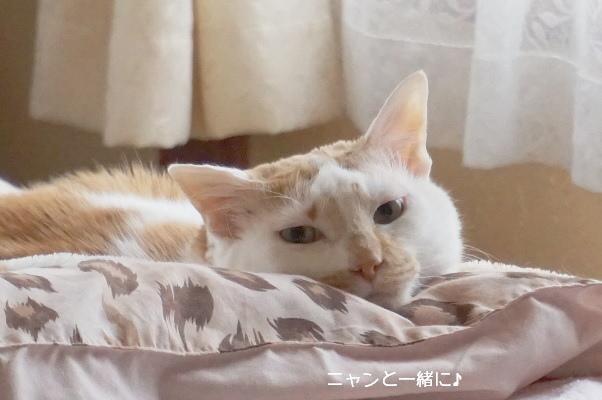sokokomo418 (1)
