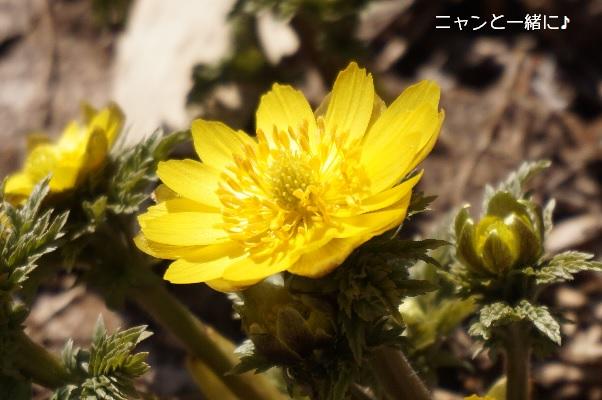 fukujyu5309n.jpg