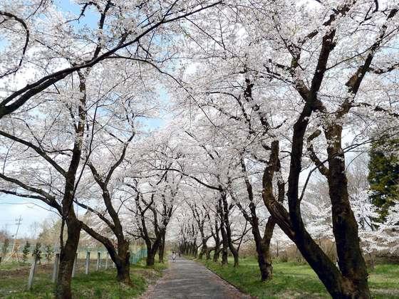 群馬・赤城南面千本桜<たびねす4月公開記事>