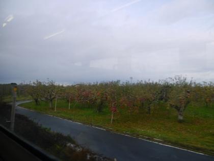 リンゴ畑(2)