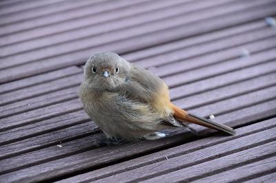 170211小鳥 (8)