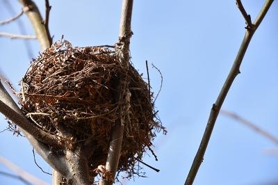 170304ひよの巣 (1)