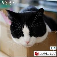 dai20170307_banner.jpg