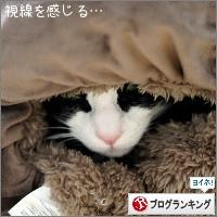 dai20170308_banner.jpg