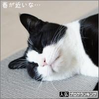 dai20170309_banner.jpg