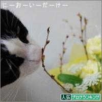 dai20170403_banner.jpg