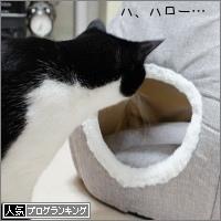 dai20170410_banner.jpg