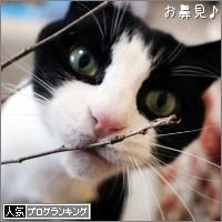 dai20170414_banner.jpg