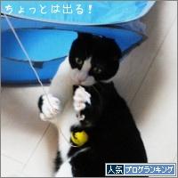 dai20170424_banner.jpg