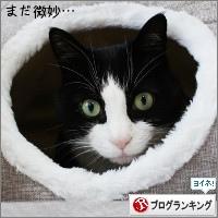dai20170426_banner.jpg