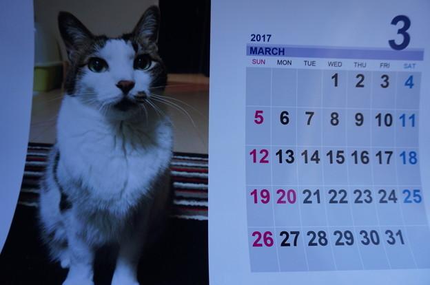 2017.3のカレンダー