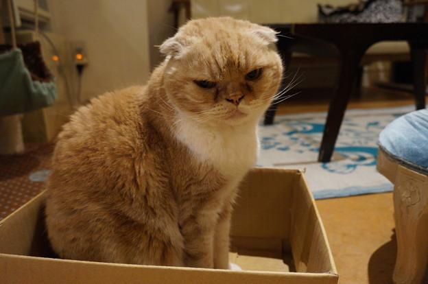 ザビエルちゃんは箱からお出迎え