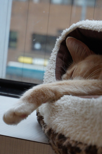 完全熟睡モード