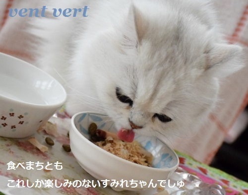 20170323211141675.jpg