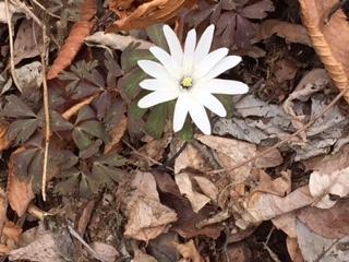flower170418_4.jpg