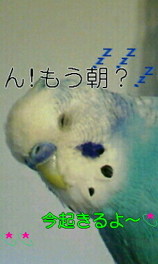 2017 03 18_0959