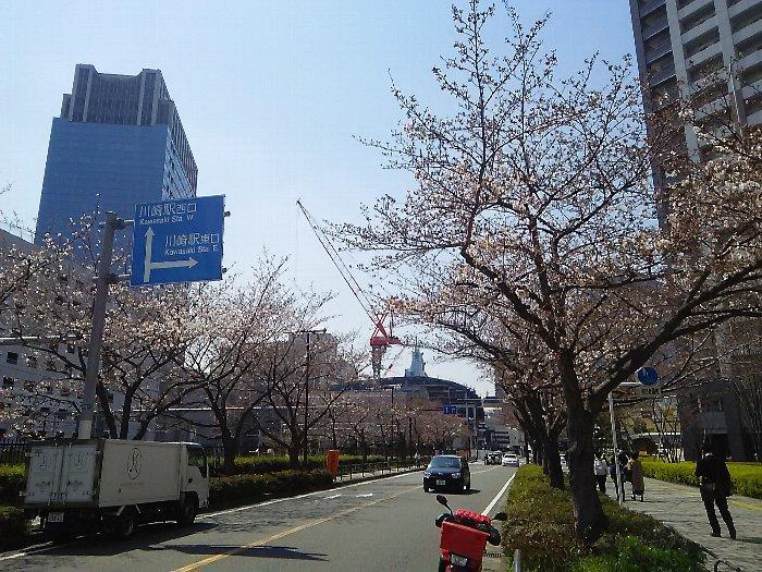 20170404sakura-03.jpg