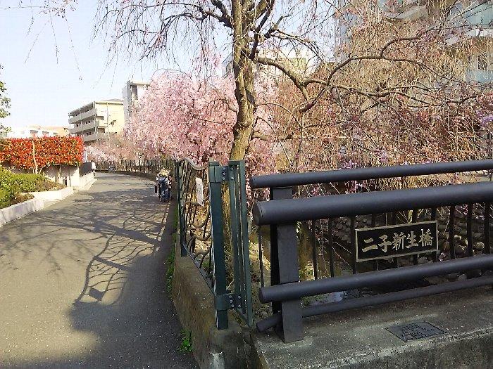 20170404sakura-07.jpg