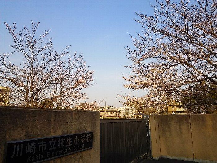 20170404sakura-10.jpg