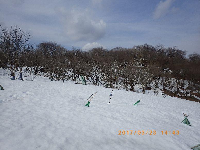 山頂への雪原