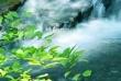 ⅡDhp370川の流れ
