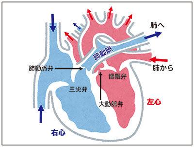 心臓断面図