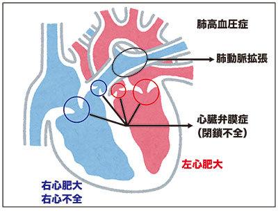 心臓断面図-2