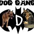 DogGang