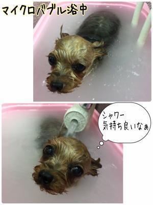 リリばぶ_convert_20170424223007