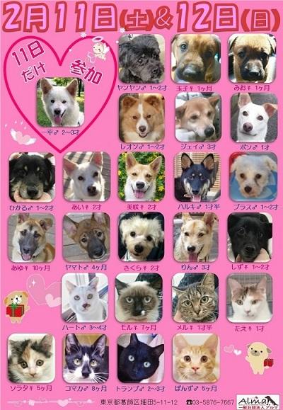 ALMA ティアハイム 2月11&12日 参加犬猫一覧