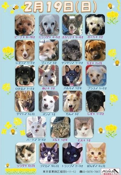 ALMA ティアハイム 2月19日 参加犬猫一覧