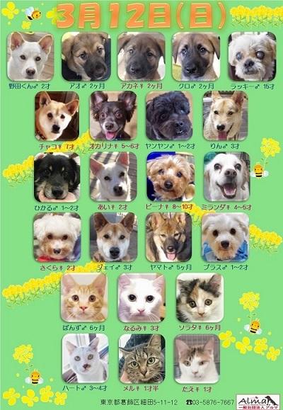 ALMA ティアハイム 3月12日 参加犬猫一覧