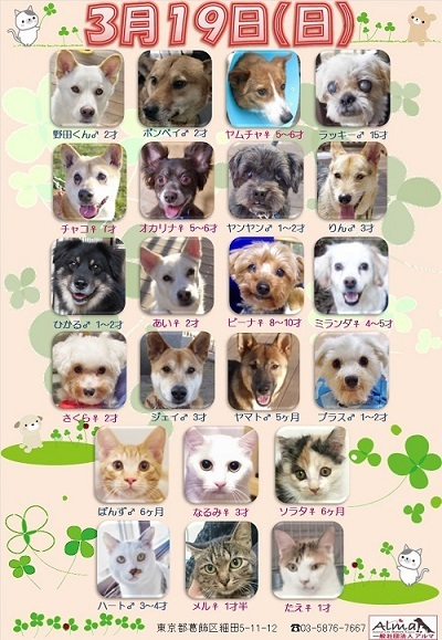 ALMA ティアハイム 3月19日 参加犬猫一覧