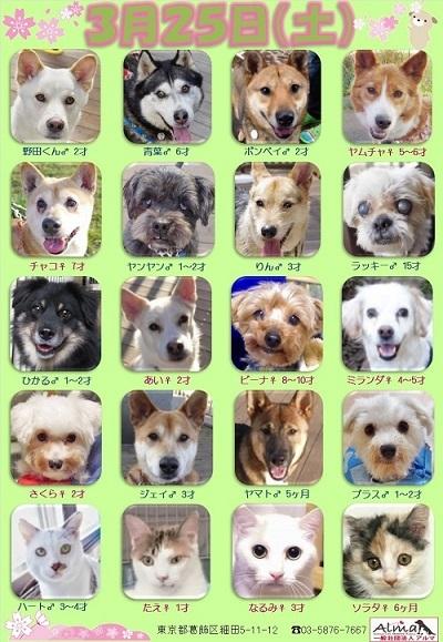 ALMA ティアハイム 3月25日 参加犬猫一覧