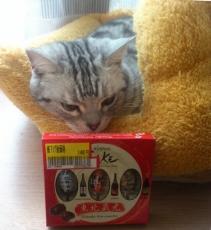 猫 チョコ