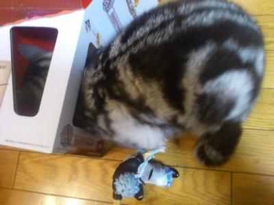 一番くじ 箱 猫
