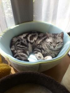 猫 接触冷感