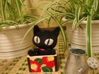 ランと黒猫