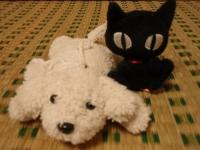 白犬と黒猫