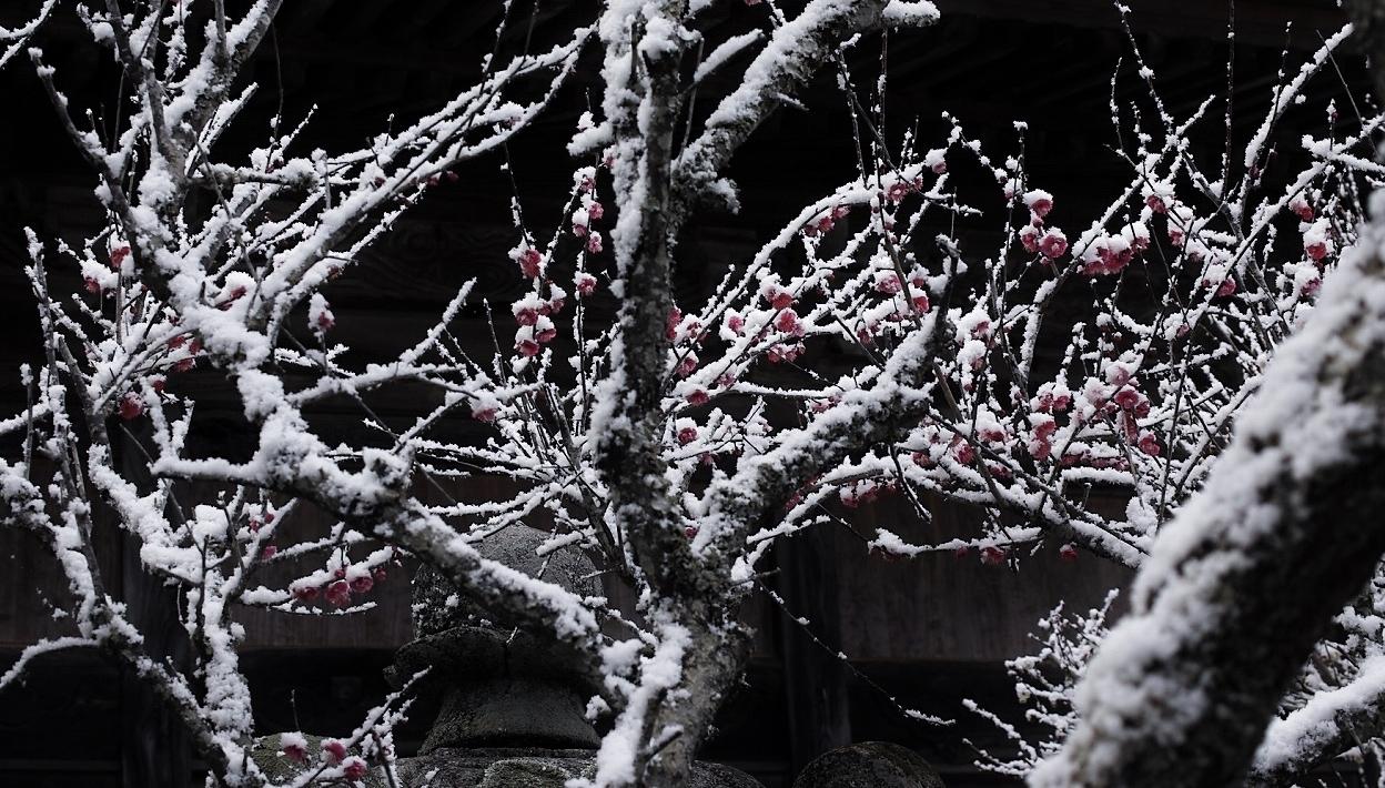 雪と梅07