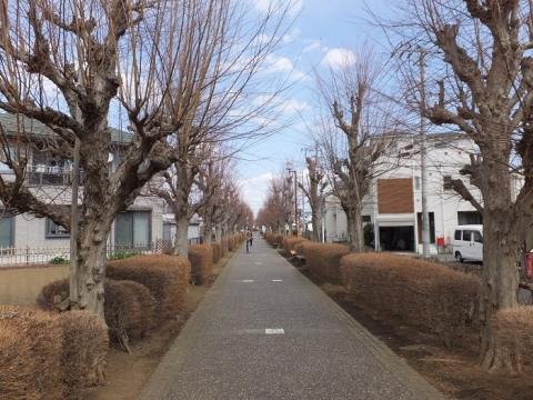 寒川町の一之宮緑道