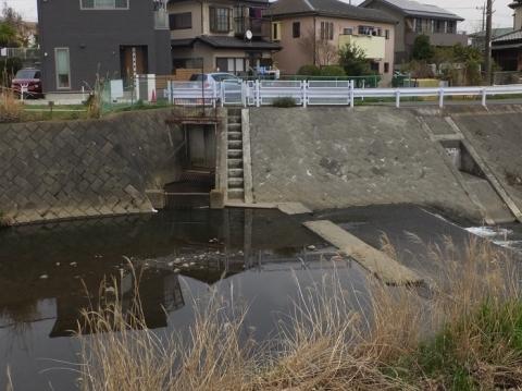 荻野川の白根堰・妻田用水取水口