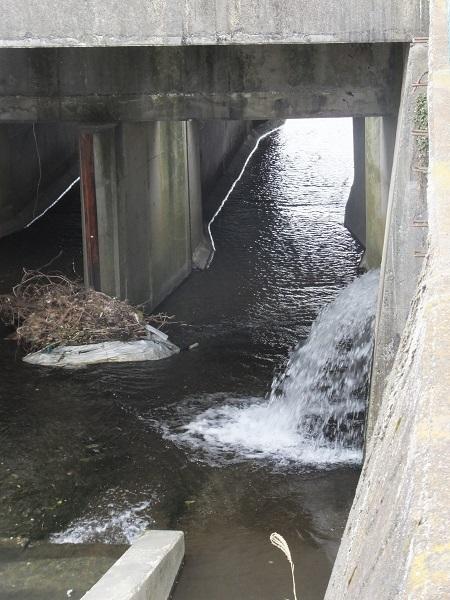干無川河口付近・妻田用水が合流