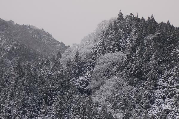 2017-03-08DSC05228.jpg