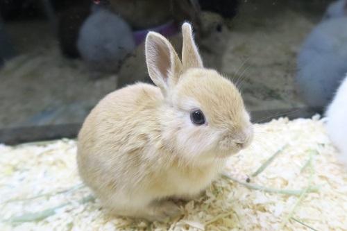 ミニウサギ0328