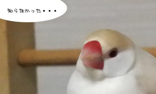 ピノしゃんの秘密_2