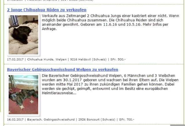 スイス 犬 インターネット販売
