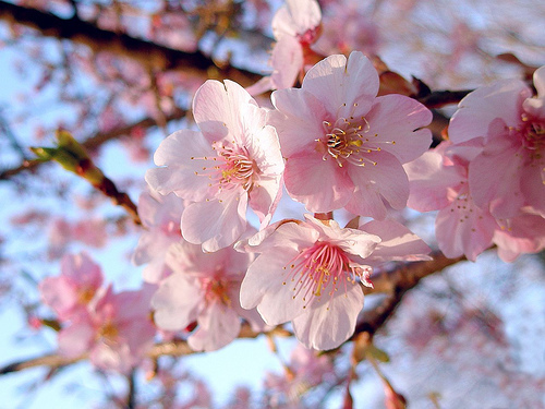 by:tanakawho 桜