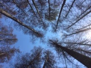 ybp tree